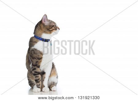 Cat looking too left isolated on white background.