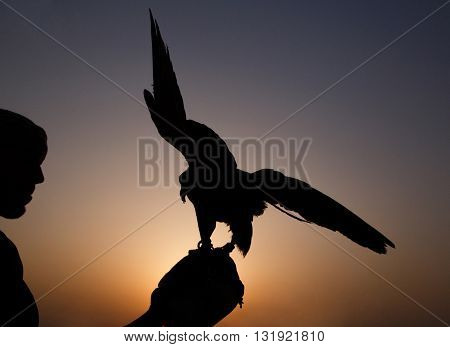silhouette of Arab with falcon at sunset