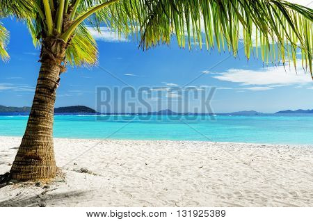 Green tree on white sand beach. Malcapuya island Palawan Philippines.