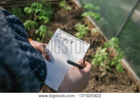 Closeup hands of greenhouse worker taking notes in seedlings in nursery. Top view. the inscription gurken in a notebook.