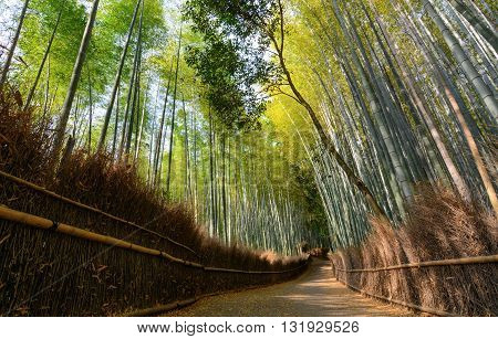 Quiet path in the Arashiyama bamboo grove in Kyoto, Japan