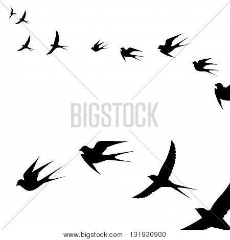 a flock of flying birds vector illustration