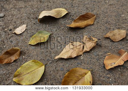 The fallen autumn leaves on the pavement, background of fallen autumn leaves on black asphalt, outdoor.