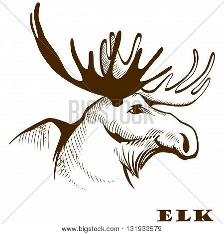 Vector illustration hand drawn elk moose head.