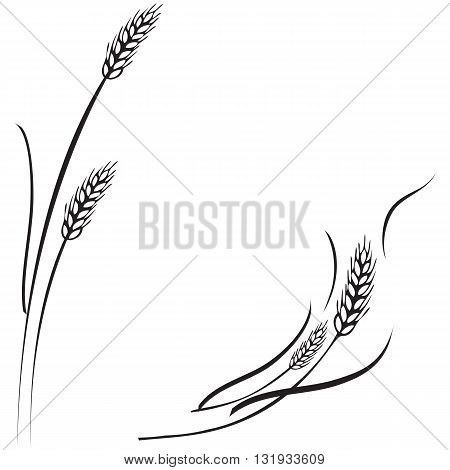 Vector black and white illustration of a few ripe wheat ears. Can be used as frame corner or border design element.