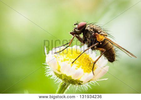 Closeup Of Little Fly