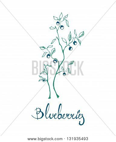 Vector Sprig of blueberries with a signature