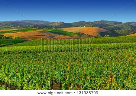 Hills of Tuscany with Vineyards in the Chianti Region of Italy