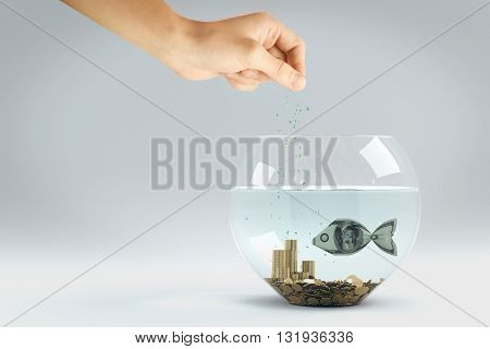 hand feed dollar bill in form of a fish in aquarium