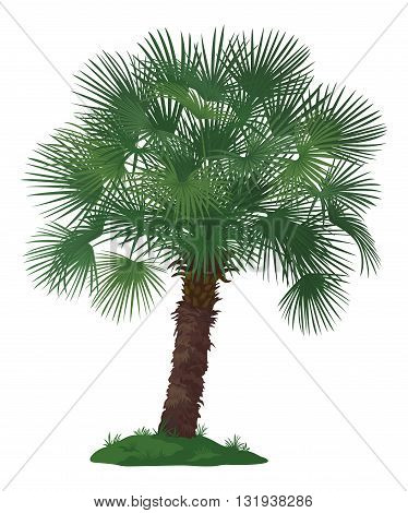 Tropical Palm Tree with Green Leaves and Grass Isolated on White Background. Vector