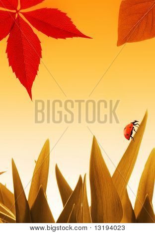 Small ladybug on dry orange grass and colorful autumn leave flying around