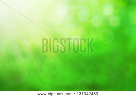 Green blurred background and sunlight. Green summer background with blur.