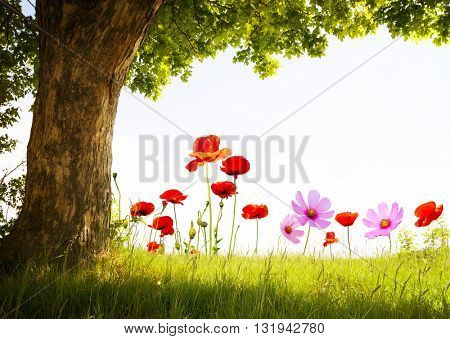 landscape with poppy flowers and single tree on white sky