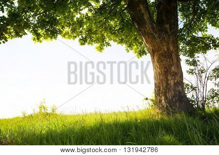landscape with tree on the field with white sky