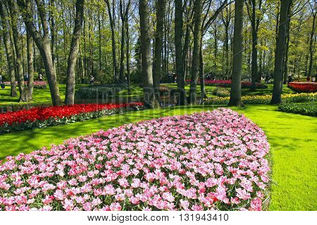KEUKENHOF, NETHERLANDS - MAY 5, 2016: Tourists and colored tulips in spring in the Keukenhof Park, Holland, Netherlands