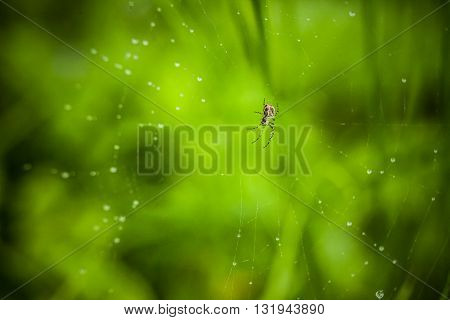 Macro photography of little spider. Nature detail