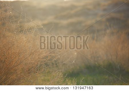 Springtime in the wild steppe during sunset