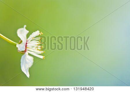 Macro photography of beautiful flowers. Nature detail