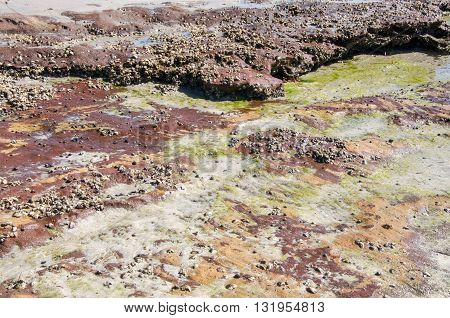 Algae colors on the beach reef with sandstone rock in the coral coast at Jake's Point in Kalbarri, Western Australia.