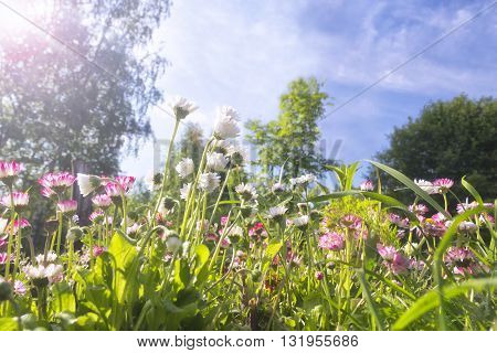 Field of blooming wildflowers in the sun