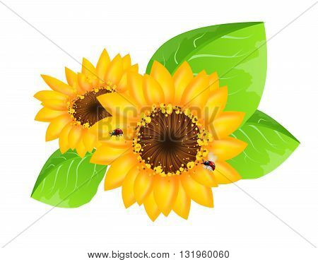 Beautiful sunflower illustration with green leaves and ladybugs