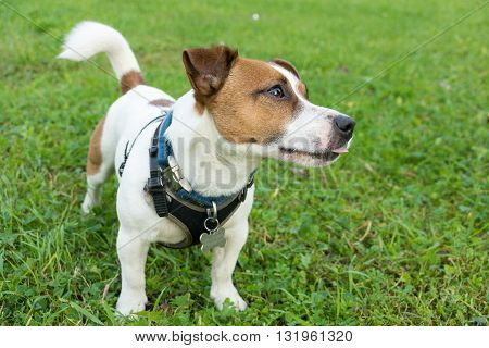 The photo shows a dog with a ball