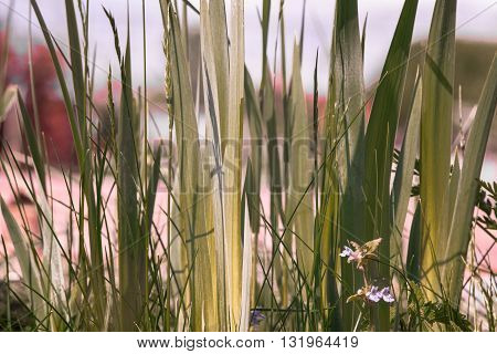 Colorful garden grass with a flower and green leaves