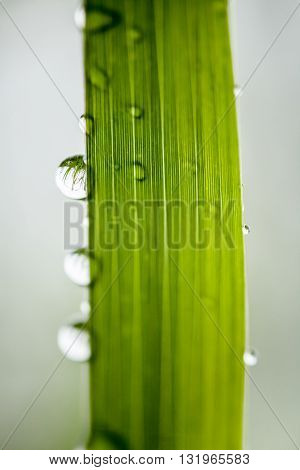 Macro photography of waterdrops in nature. Beautiful detail