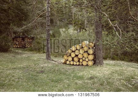 Woodpiles of big pieces of cut timber wooden trunks in a forest setting. Forestry industry natural conservation sustainable energy resources concept