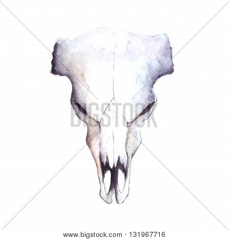 watercolor cow buffalo skull, hand painted illustration