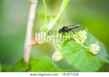Macro photography of little fly in nature diptera