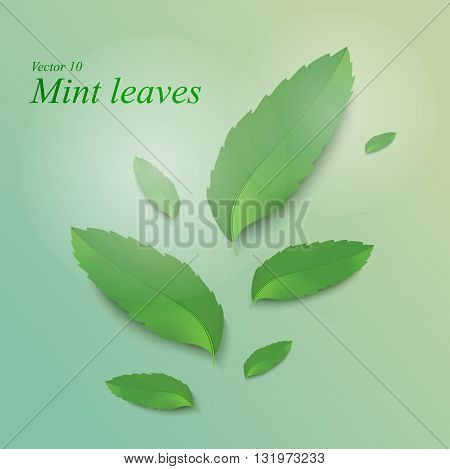 Fresh mint leaves. Refreshing mint background with leaves