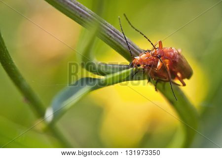 Macro photography of pair of insects. Nature detail