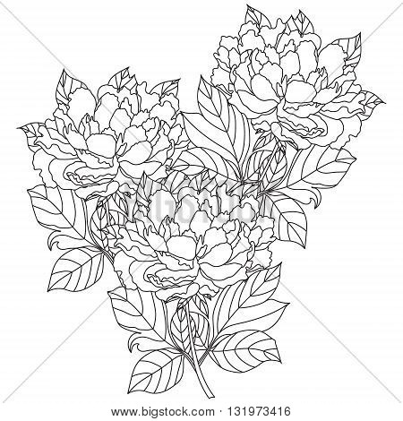 Vector bouquet peony Coloring book page for adults. Hand drawn artwork. Love bohemia concept for wedding invitation, card, ticket, branding, logo, label. Gift for girl, women. Black and white.