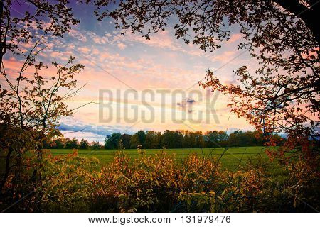 Nature landscape at summer. Beautiful colorfull evening on sunny meadow.