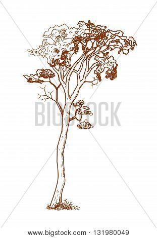 Vintage tree drawing design  - vector illustration.