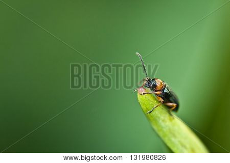 Macro photography of a little insect. Nature detail