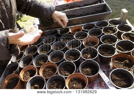 Seeds And Sow In Plastic Containers