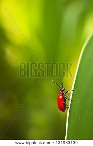 Macro photography of a little insect. Nature detail photo