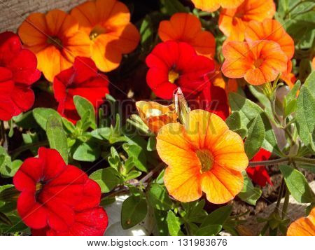 Photo of red and orange flowers with green leaves