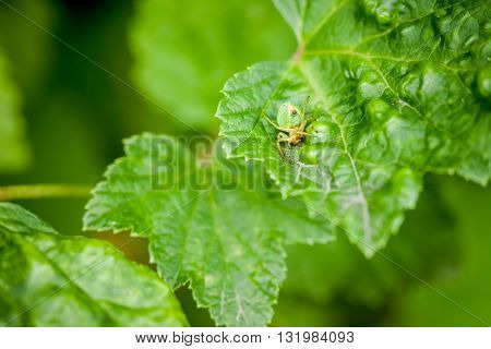 Macro photography of little spider. Nature detail photo