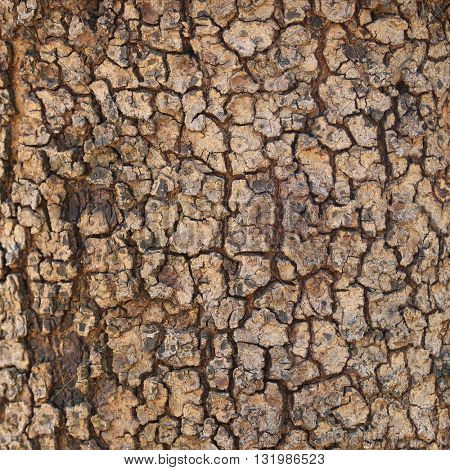 brown bark. may used as background.