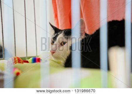 Front view of cat in the cage.