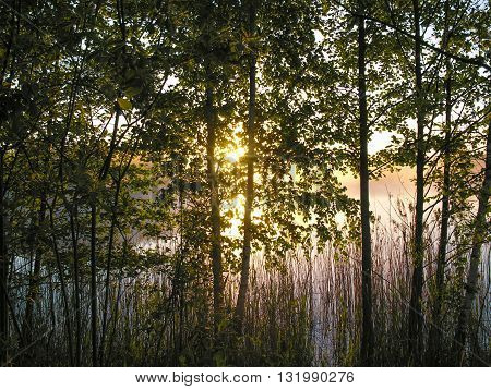 Sunrise on the Lake-the first rays of the rising sun streaming through the branches of the young birches coastal