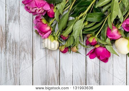 White and pink peonies flowers on the white painted wooden planks. Place for text. Square image. Top view.