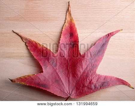 maple leaf on maple wood for natural background
