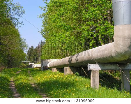 The pipeline laid along the edge of the forest