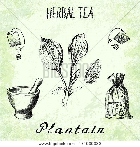 Plantain herbal tea. Set of vector elements on the basis hand pencil drawings. Herb Plantain tea bag mortar and pestle textile bag. For labeling packaging printed products