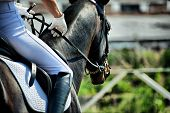 stock photo of saddle-horse  - Horse theme - JPG