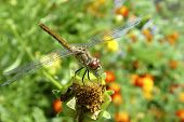 Dragonfly On A Plant.
